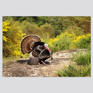 Turkey Gobbler Strut