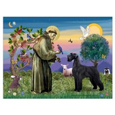 St. Francis & Giant Schnauzer Poster