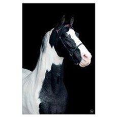 Spotted Horse Poster