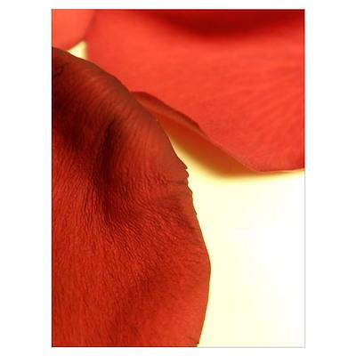 Red Rose Print Poster