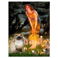 Fairies & Himalayan cat Poster
