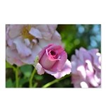 Romantic Pink Rose Postcards (Package of 8)