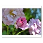 Romantic Pink Rose Small Poster