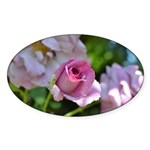 Romantic Pink Rose Sticker (Oval 10 pk)