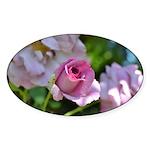 Romantic Pink Rose Sticker (Oval)