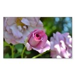 Romantic Pink Rose Sticker (Rectangle)