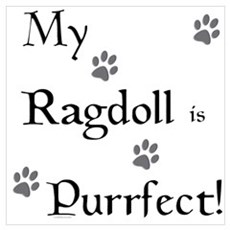 Purrfect...Ragdoll Poster
