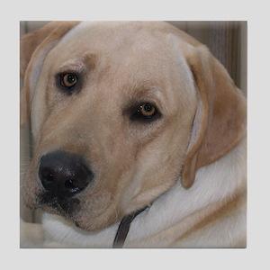 Male Labrador Retriver Tile Coaster