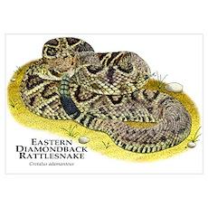 Eastern Diamondback Rattlesnake Poster