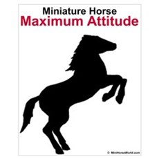 Miniature Horse Maximum Attitude Framed Print
