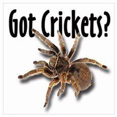 Tarantula Got Crickets Poster