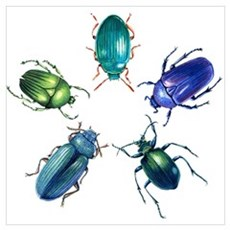 Five Shiny Beetles Poster