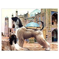 Afghan Hounds in Afghanistan Poster