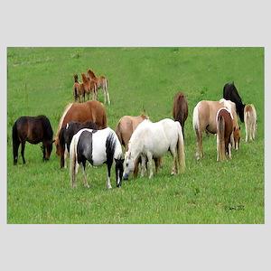 Mini Horses in Pasture