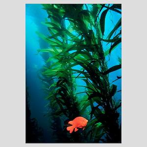 Kelp Scene