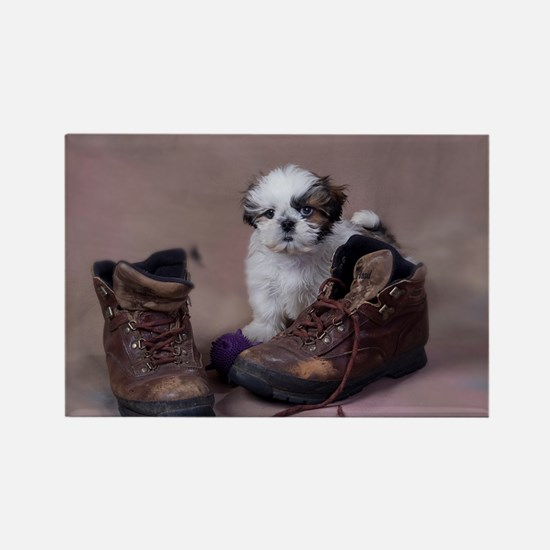 Shih Tzu boots Rectangle Magnet