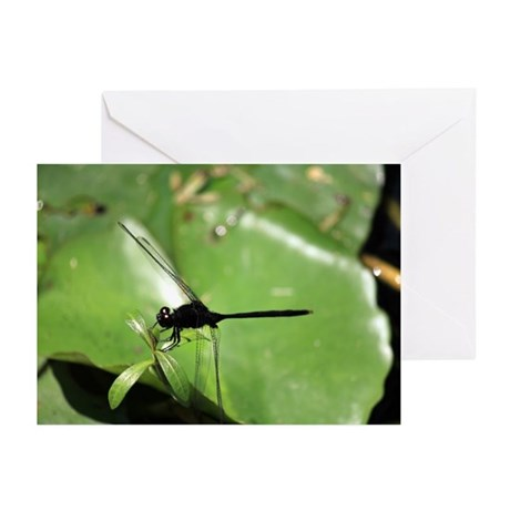 Dragon Fly Greeting Cards (Pk of 20)