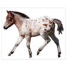 """""""Knabstrup foal 2"""" Poster"""