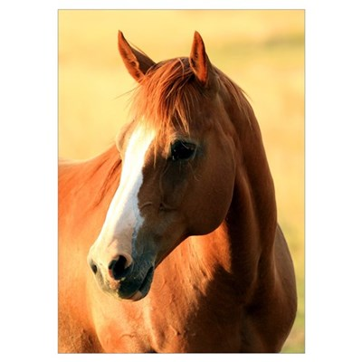 Horse ,1, Poster