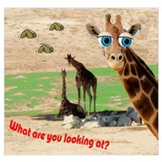 Blue-eyed giraffe Poster