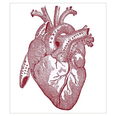 Anatomical Heart Canvas Art