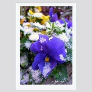 Blue Pansy in Snow Framed