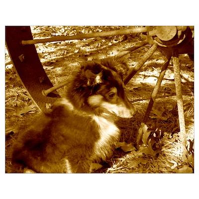 Wagon Wheel Sheltie Puppy Poster