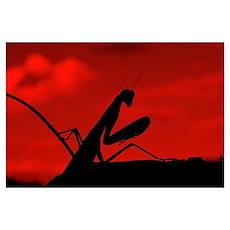 Red Sky Mantis Poster