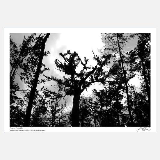 Cypress Sky I