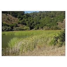 """Lake Chabot """"Water Reeds"""" Poster"""