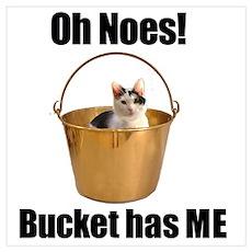 Bucket has cat Poster