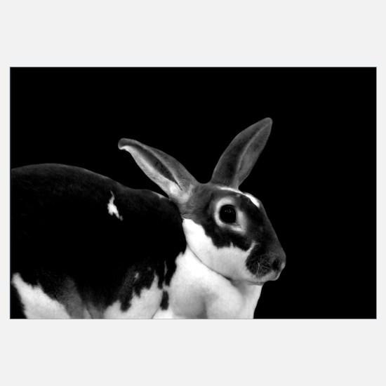 Black & White Rex