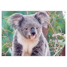 SMILING KOALA BEAR Poster
