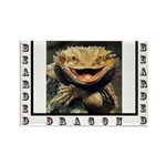Bearded Dragon Rectangle Magnet (100 pack)