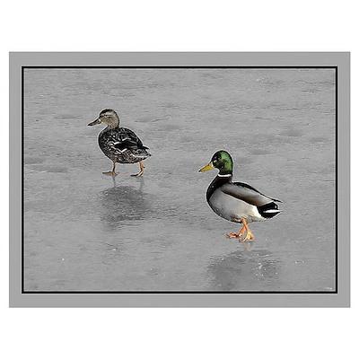 Ducks Ice Skating Poster