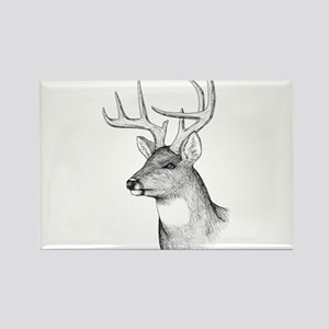 8 Point Buck Rectangle Magnet