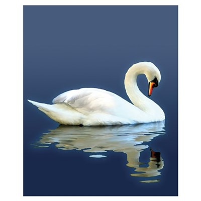 Swan Reflects Canvas Art