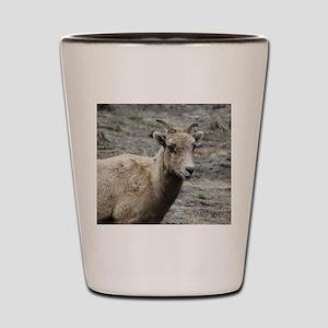 Wild. Shot Glass