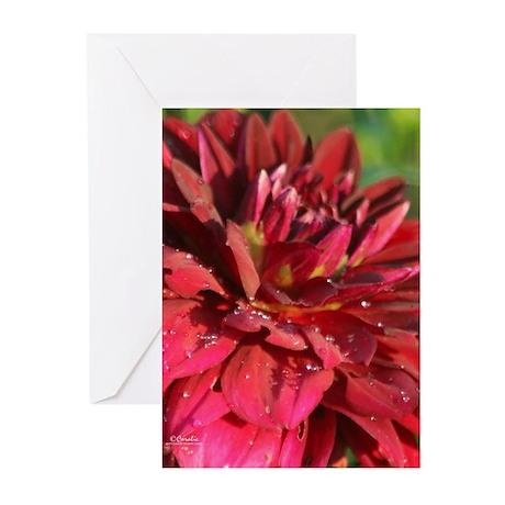Arabian Night Dahlia Flower Bloom 0 Greeting Cards