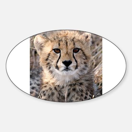 Cheetah Cub Sticker (Oval)