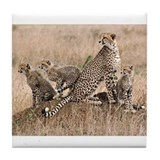 Cheetah Tile Coasters