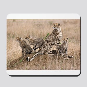 Cheetah Family Mousepad