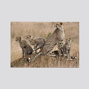 Cheetah Family Rectangle Magnet