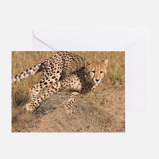 Cheetah On The Move Greeting Card