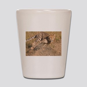 Cheetah On The Move Shot Glass