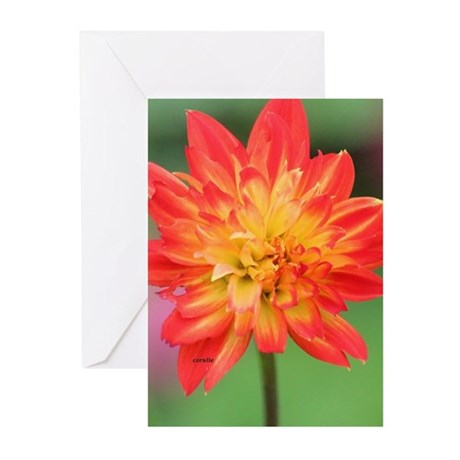 Colorful Dahlia Bud Opening 052 Greeting Cards