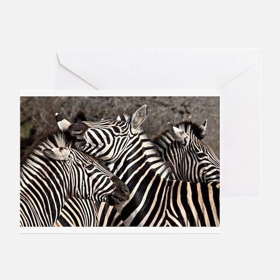 Zebras Greeting Cards (Pk of 10)