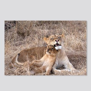 Charleston Cub and Mon Postcards (Package of 8)