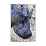 Hippo Profile Mini Poster Print