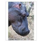 Hippo Profile Small Poster